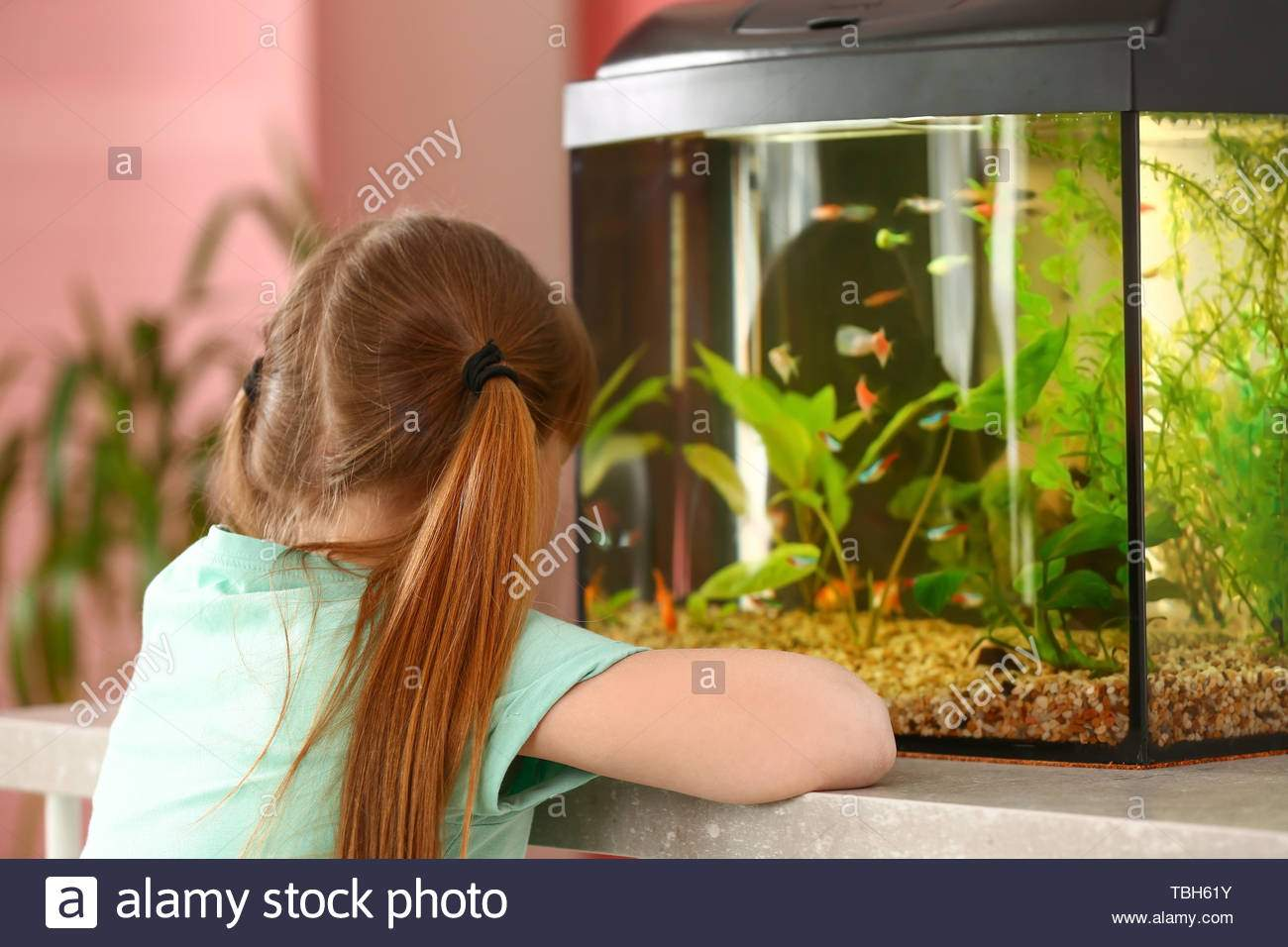 cute little girl looking at fish in aquarium TBH61Y