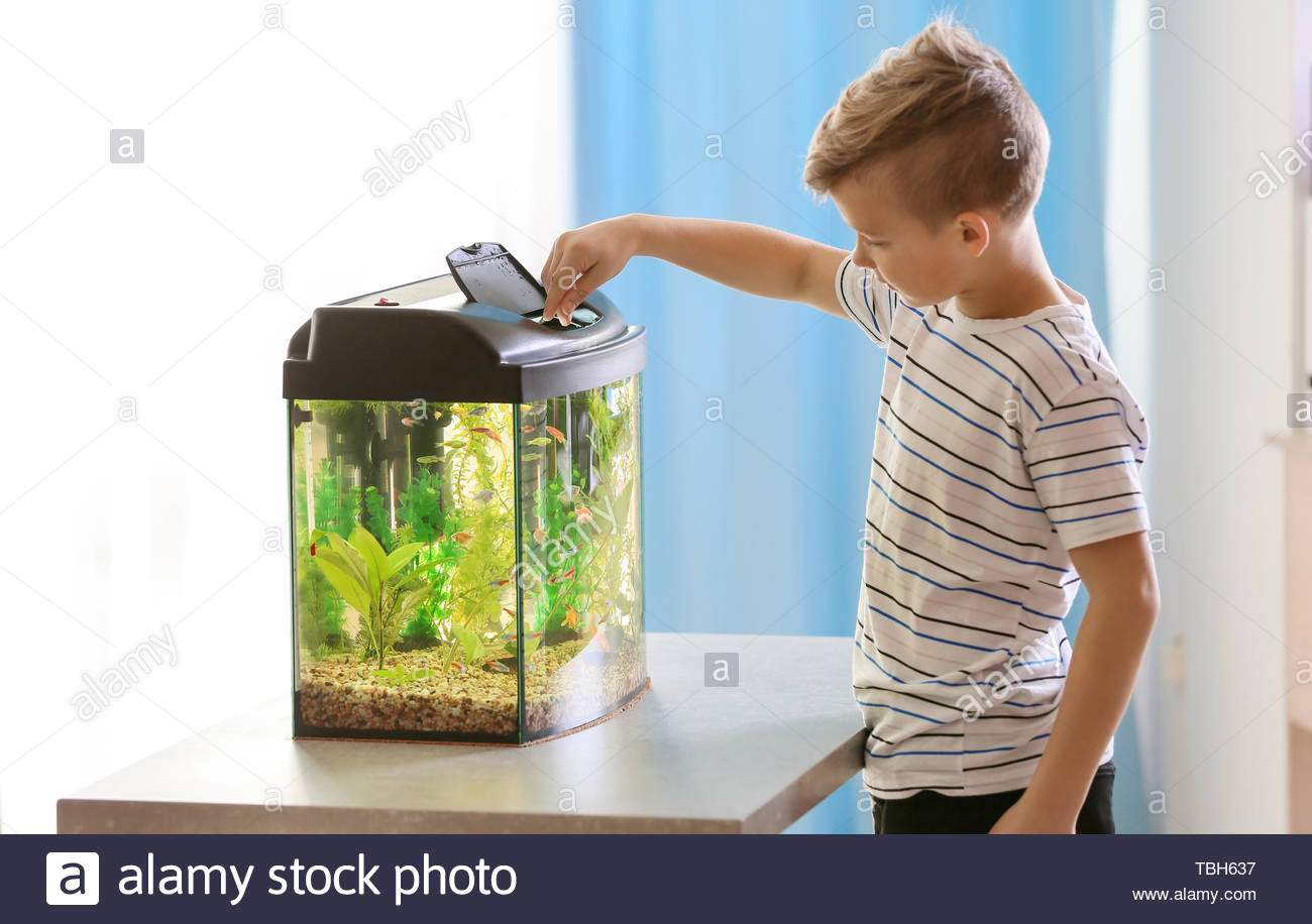 cute little boy feeding fish in aquarium TBH637