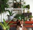 Hängepflanzen Wohnzimmer Elegant Our 10 Favorite Pet Safe Indoor Plants and 7 to Avoid